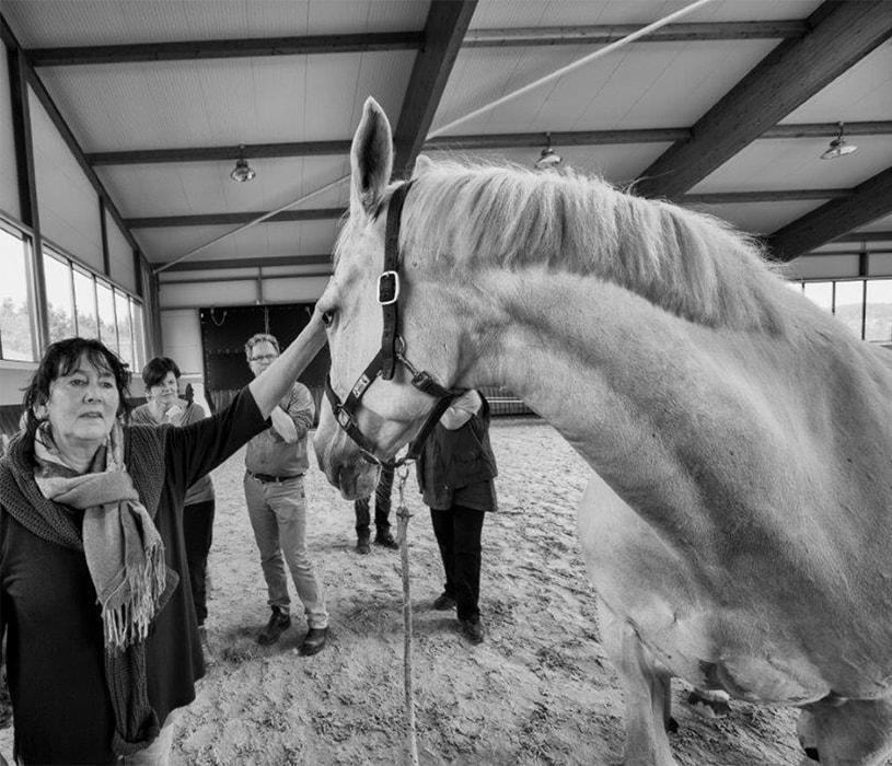 Wat maakt dat het paard je kan laten ervaren wat geen training of boek je kan bijbrengen?