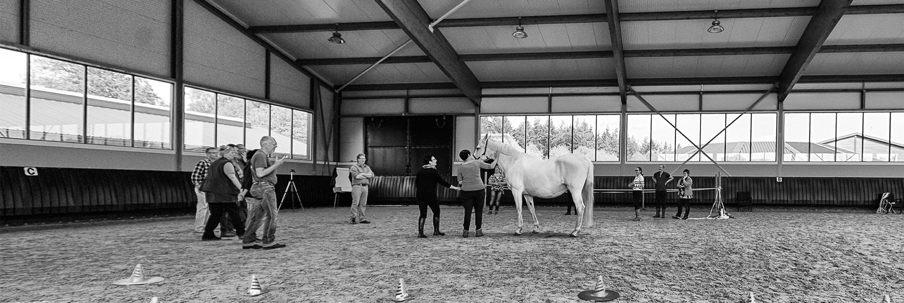 Onderscheid je als coach met het paard als co-trainer