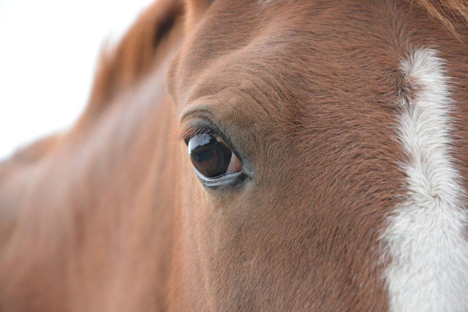 Door de ogen van het paard bekeken